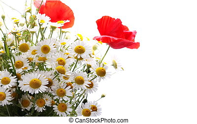 daisies and red poppies isolated