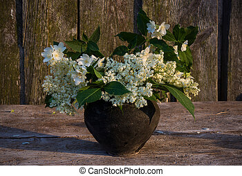 Bouquet of wild flowers - Bouquet of elderberry flowers and...