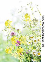 Bouquet of wild flowers - Bouquet of different yellow, pink...
