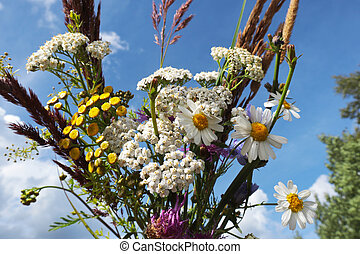 bouquet of Wild flowers tansy, chamomile, grass, yarrow