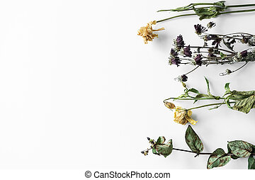 Bouquet of wilted flowers on a white background
