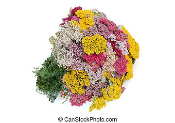 Bouquet of yarrow (lat. Achill?a), isolated on white ...