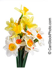 Bouquet of yellow and white narcissus