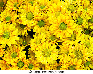 Bouquet of yellow flower For web page background