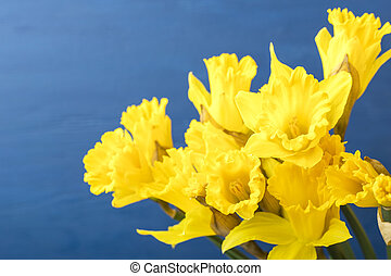Bouquet of yellow narcissus on a blue background. Copy space