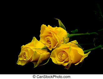 bouquet of yellow roses on a black background