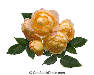 Bouquet of yellow roses with green leaves