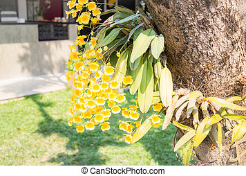 Bouquet of yellow wild orchid