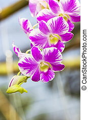 bouquet pink orchid in the gaden.