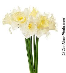 bouquet, printemps, narcissuses, blanc