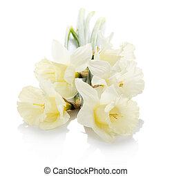 bouquet, printemps, narcissuses