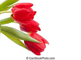 bouquet, printemps, tulipes, rouges
