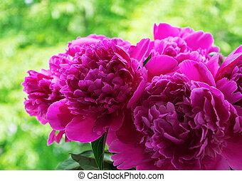 bouquet, rose, pivoines