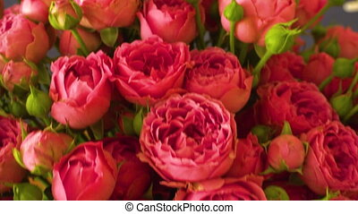 bouquet, roses, rose, vue, panoramique