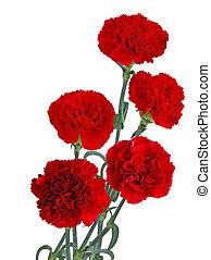 bouquet, rouges, oeillet