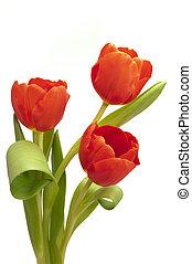 bouquet, tulipe, fleurs, tas