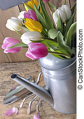 bouquet, tulipes, arrosoire