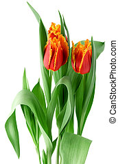 bouquet, tulipes, fleurs, coloré, printemps