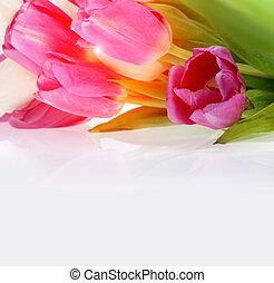 bouquet, tulipes