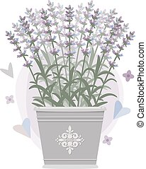 bouquet, vecteur, bucket., illustration., lavande
