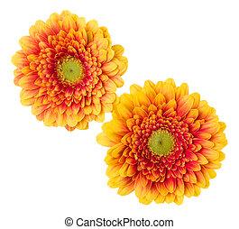 bouquet, vue, tulipes, fond, deux, closeup., isolé, fleurs blanches, lay., shadow., air, tas, sommet, orange, plat, sans