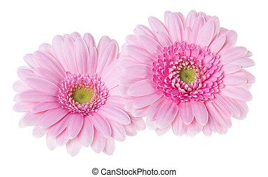 bouquet, vue, tulipes, fond, deux, rose, closeup., isolé, fleurs blanches, lay., shadow., air, tas, sommet, plat, sans