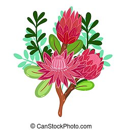 Bouquet with Protea Isolated on a White Background. Vector graphics