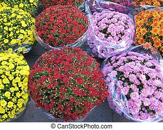 Bouquets of flowers.