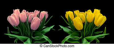 bouquets of tulips isolated on a black background