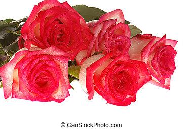 bouquetten, kaart, rozen