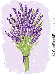bouquetten, lavendel, illustratie