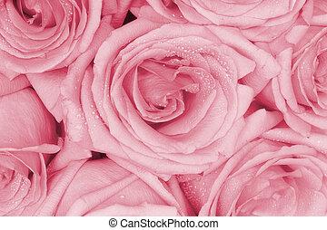 bouquetten, rooskleurige rozen
