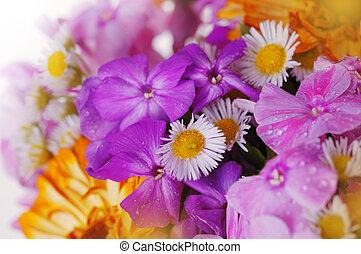 bouquetten, van, kleurrijke bloemen, c