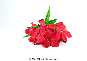 bouquetten, van, rood, flowers.
