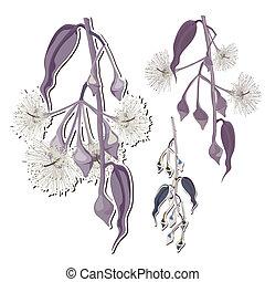 bourgeons, eucalyptus, fleur