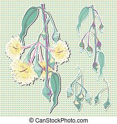 bourgeons, eucalyptus, fleur, vert