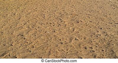 bourgeons, sable, autumn., texture