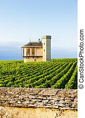 bourgogne, de, frankrijk, wijngaarden, vougeot, clos, blanc...