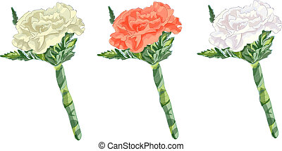 Boutonniere with a carnation. Vector image.