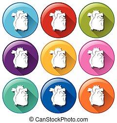 boutons, coeur, organes