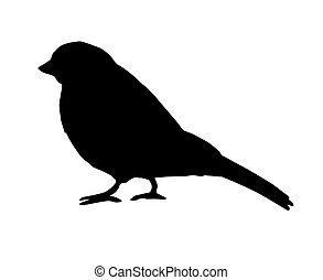 bouvreuil, oiseau noir, vecteur, silhouette, moineau