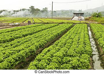 bouwland, met, velen, groentes