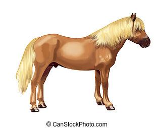 bovenkant, avelignese, paarde
