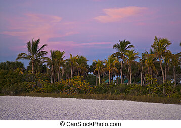 BOWDITCH POINT PARK - Palm trees against beautiful sunset...