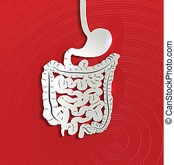 bowels, ペーパー, 胃, 赤い背景