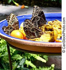 Bowl of Butterflies