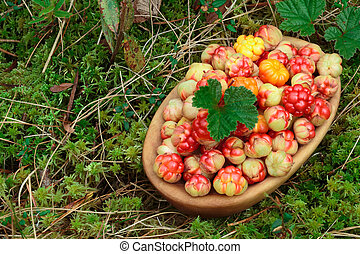 Bowl of cloudberries in the moss