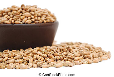 bowl of wheat grain on white background