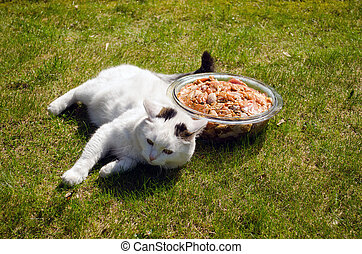 bowl raw beef pieces in the meadow and fat cat