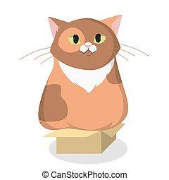 box., gatto